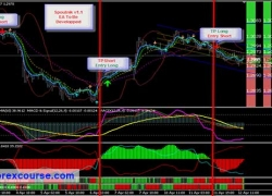 How Forex Scalping and Automated Trading Work